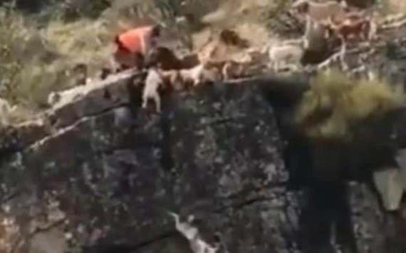 Perros caen por un barranco al acorralar a un venado; el cazador no hizo nada para salvarlos
