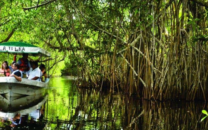 Denuncian deforestación de mangle en Paraíso