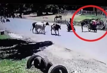 Con ustedes ¡Kung-Fu Vaca! Derribó  a motociclista de una patada