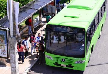 Transbus pretende implementar 50 unidades