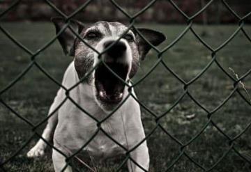 En esta localidad si tu perro ladra mucho y hay quejas, serás multado