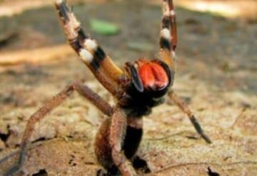 ¿El veneno de araña es mejor que el Viagra? Aquí te decimos