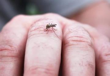 Prepara Tabasco plan emergente contra el dengue