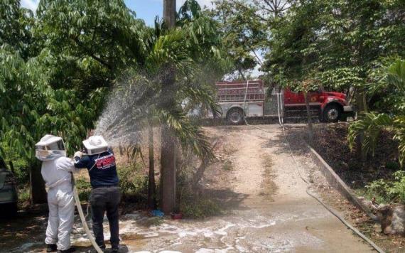 Abejas atacan a feligreses durante Viacrucis en la ranchería Corregidora