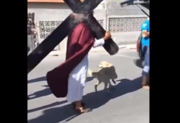 VIDEO: Perrito defiende a hombre que representaba a Jesús en un viacrucis
