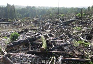 Será castigado quien afecte al ambiente: López Obrador