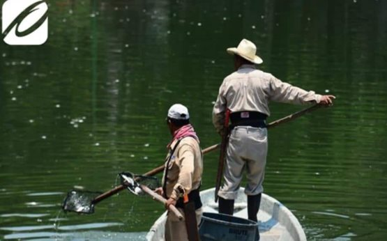 Personal del Ayuntamiento levanta peces muertos en la Laguna de las Ilusiones