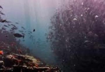 Peces y especies marinas podrían reducirse hasta en una sexta parte por calentamiento global