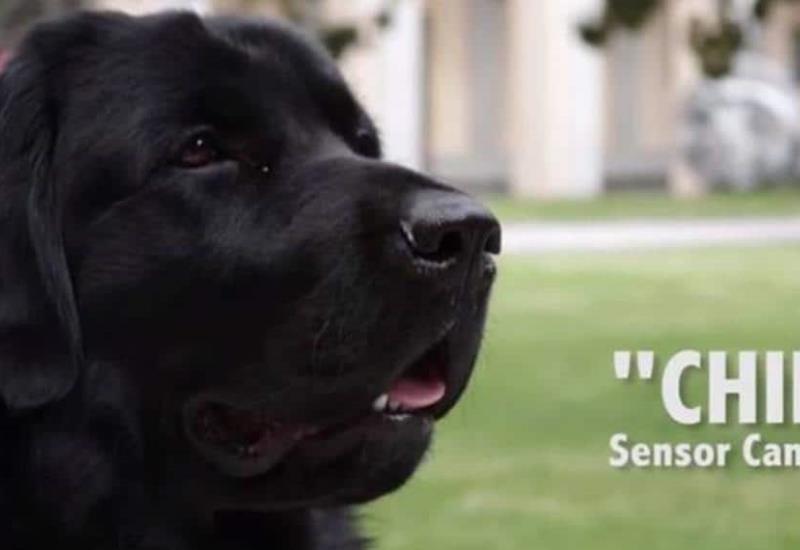 Conoce a Chino el perrito encargado de la seguridad de AMLO que ¡detecta bombas!