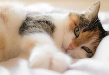 Un gato era la causa de su enfermedad