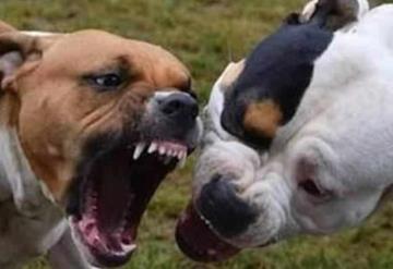 Adolescente es mutilado por 3 perros pitbull y muere