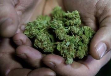Senado discutirá el próximo mes sobre marihuana