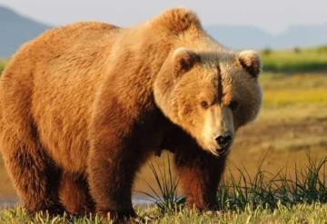 Mujer hiere de bala a cazador que era atacado por oso