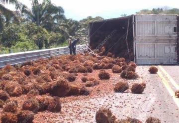 Vuelca tráiler en la carretera Palenque - Catazajá, transportaba palma de aceite