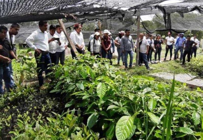 Sembrando vida, donará 30 mdd a Guatemala