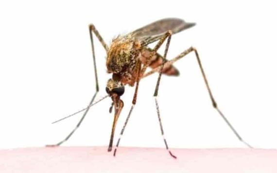 Muere de rara enfermedad por un mosquito, el primer caso en 20 años