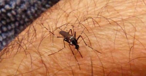 Repunta venta de remedios caseros contra mosquitos - Diario Presente