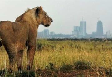 Muere una persona tras ataque de león en los alrededores de un parque