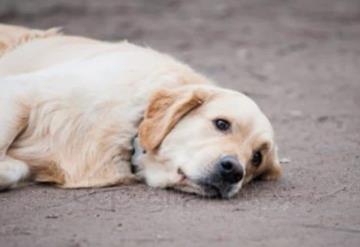 Desentierran a un perrito vivo, su reacción te dejara sin palabras