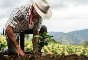 Sembrando Vida da resultado; Tianguis Campesino en Comalcalco