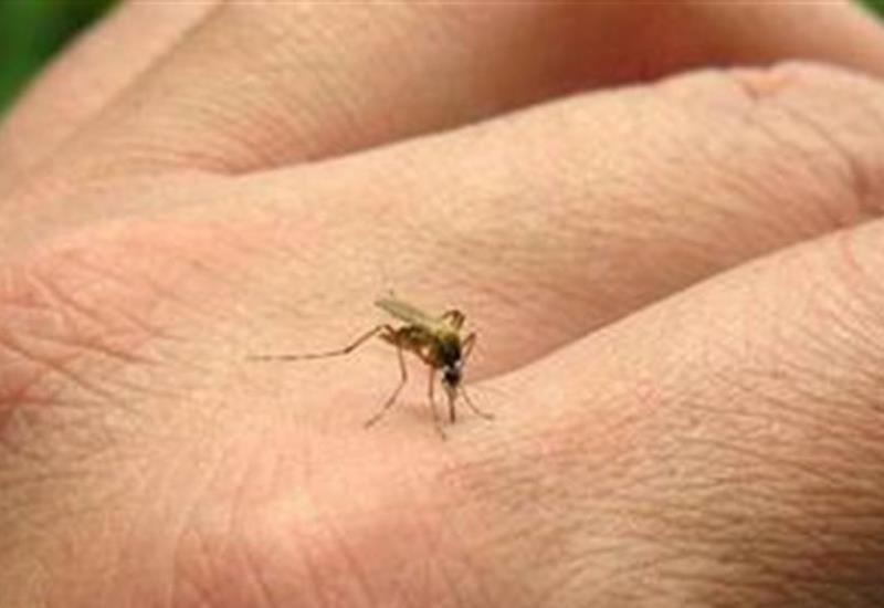 Alerta en 4 municipios de Tabasco por dengue