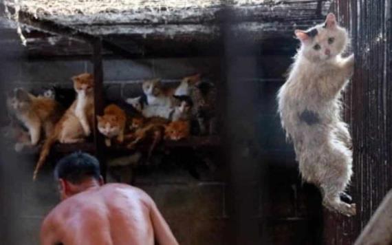 Prohíben comer perros y gatos tras crisis de coronavirus en Shenzhen, China