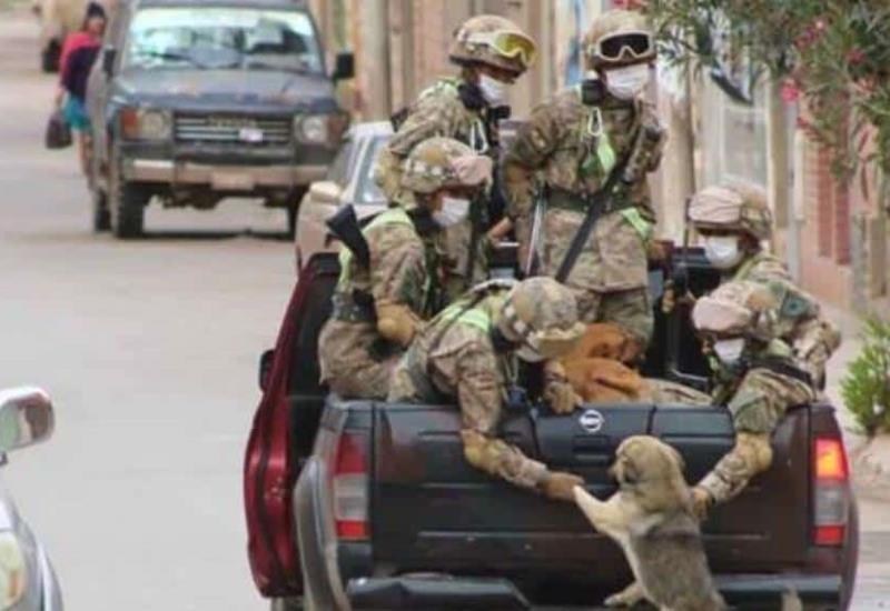Perritos sin hogar son rescatados por soldados durante cuarentena por el covid-19