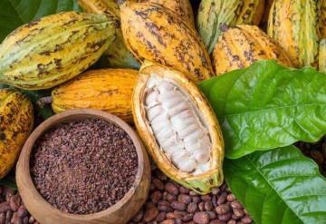 Al cacao y chocolate de Tabasco, el COVID-19 no los detiene, se realiza exportación