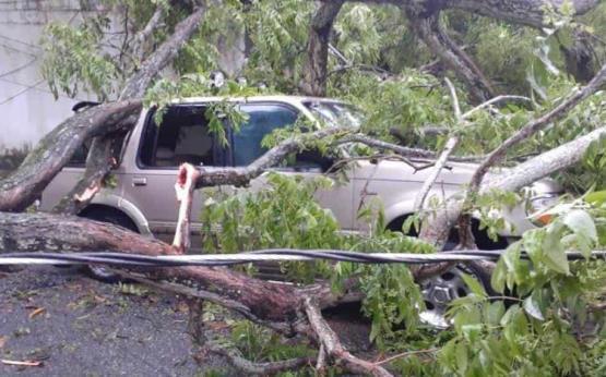 Se desploman árboles por lluvias en Villahermosa