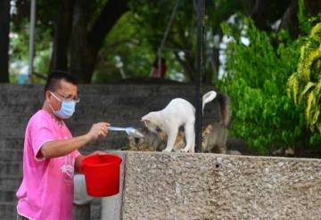 Piden ayuda para Gatos Tomasitos del Garrido