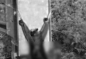 Torturan hasta la muerte a animal en peligro de extinción