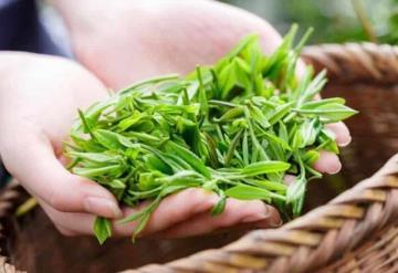 Maravillas del té verde para tener una hermosa piel