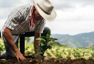 Sembrando Vida beneficia a 421,750 trabajadores