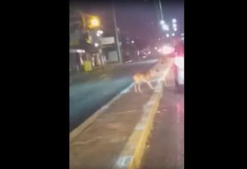 VIDEO: Automovilista deja abandonado a perrito en carretera Villahermosa - La Isla