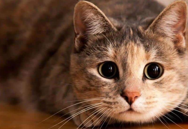 Al menos 15 contagiados de covid tras asistir a fiesta de un gato en Chile