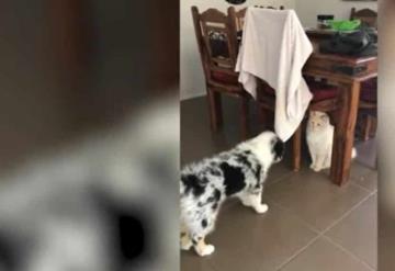 Perro es rechazado por otros cachorros y es adoptado por un gato