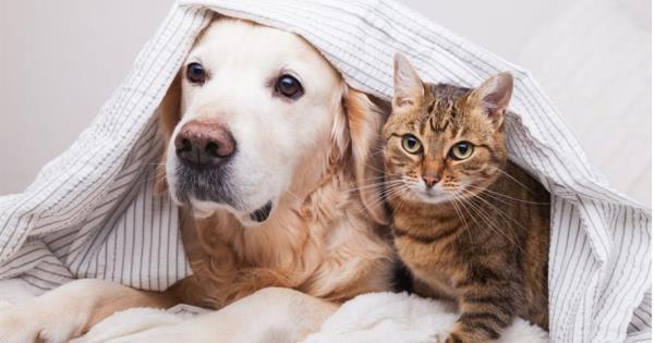 Continuará campaña de vacunación antirrábica para perros y gatos en Villahermosa