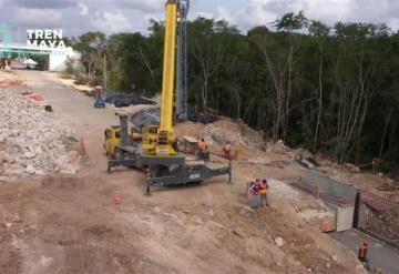 Tren Maya: Finaliza la reubicación de árboles de Tulúm a Cancún